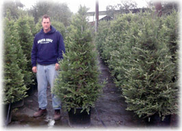 6' Planted Christmas Tree