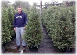 Rent Live Christmas Tree San Francisco San Jose Santa Cruz ...