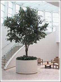 plants for office plant rental trees plant service maintenance