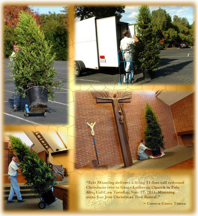 lease a living christmas tree - Christmas Tree Rental