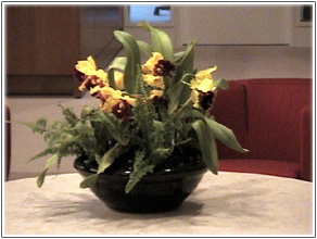 orchid arrangements image