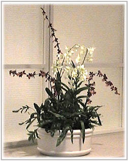 orchid rental image