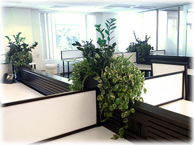 Plant Rental San Jose Plant Leasing Maintenance Bay Area